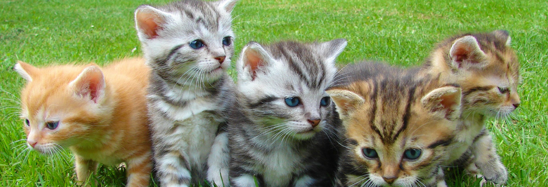 Kitten, Cats, group of cats